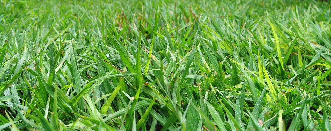 Kiedy i jak nawozić trawnik