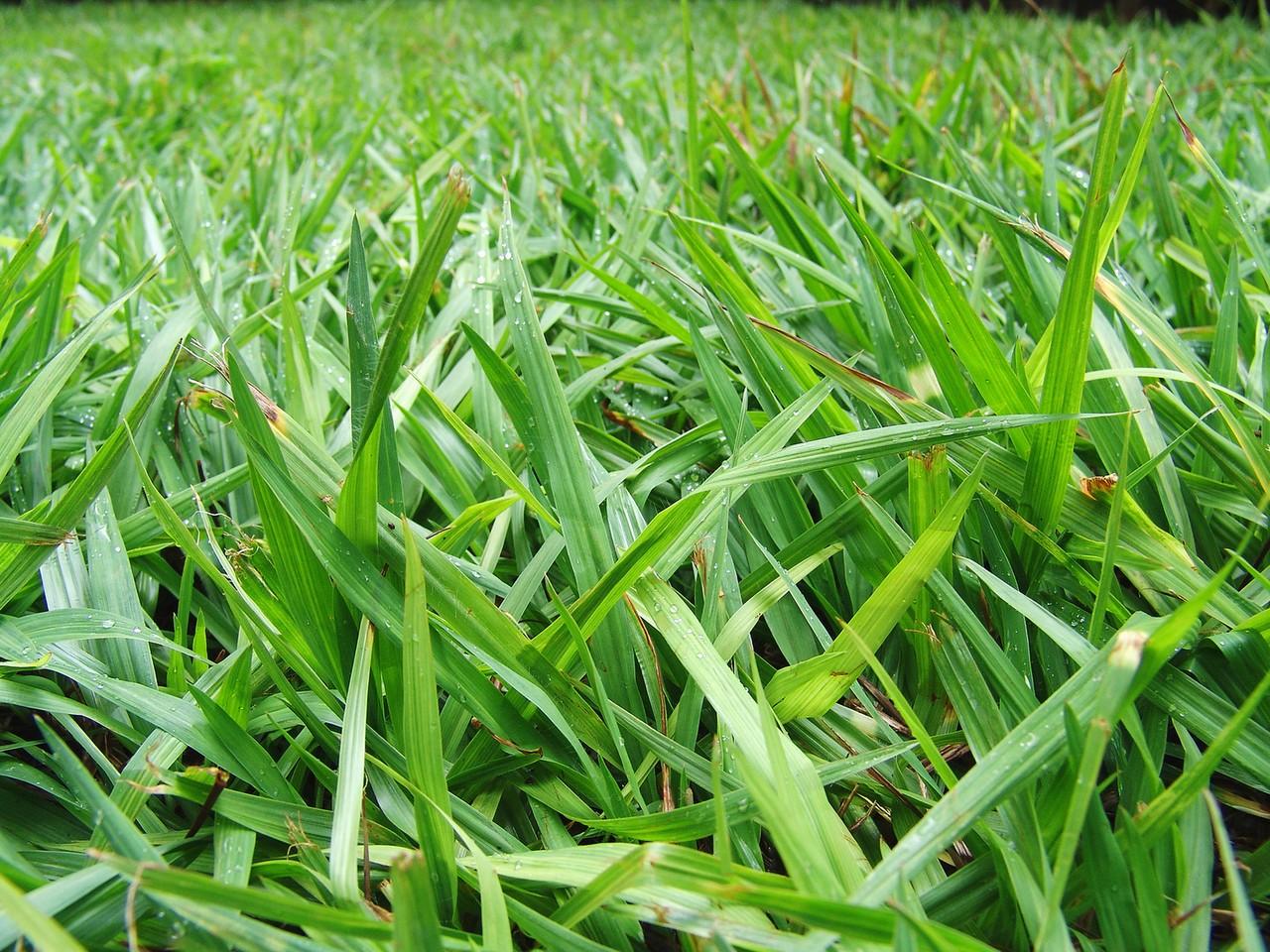 Nawozy do trawnika