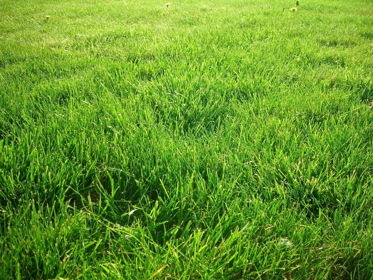 Pielęgnacja naszych trawników