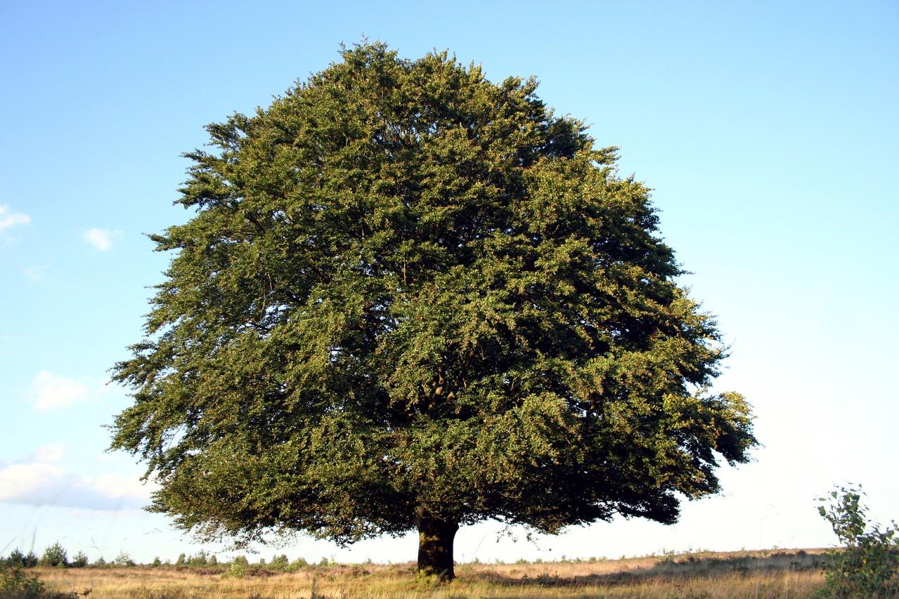 Usuwanie chwastów wokół drzew